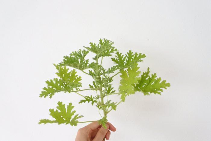 葉物  葉の上にガーベラの花を重ねたり、茎の部分の隙間を埋めるために使用します。グリーンは花を引き立てたりボリュームをアップさせる役割もありますよ。