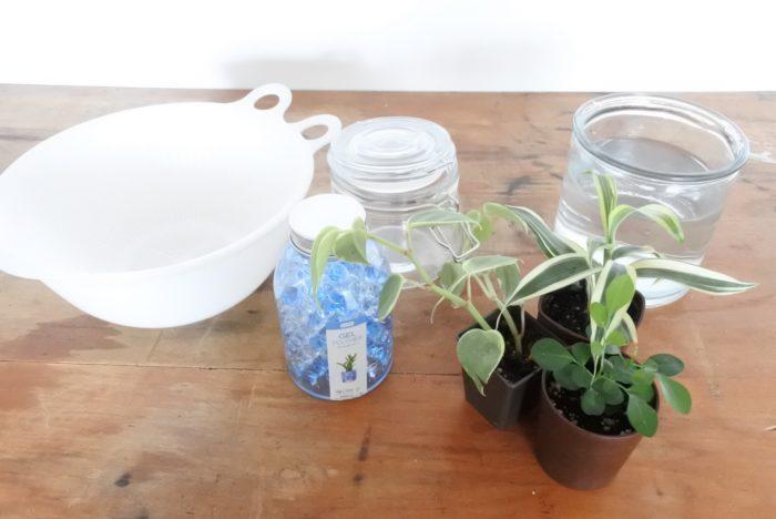 購入したもの以外で寄せ植えを作る際に使用した、あると便利な道具をご紹介します。  ・ザルとボウル…ジェルポリマーの水を切る時に使用しました。  ・水の入った容器…土を洗い流す時に使用。根が絡まった土は手作業で取り除くので、両手が入る大きさのものが使いやすいです。  ・布巾や新聞紙など