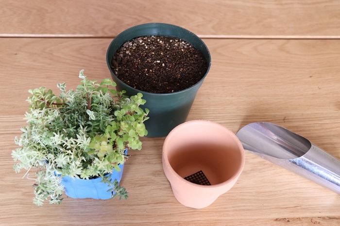 ・テラコッタ鉢 ・鉢底ネット ・市販の培養土(「花、野菜用の土」または、「多肉植物、サボテン用の土」など) ・セダムの苗