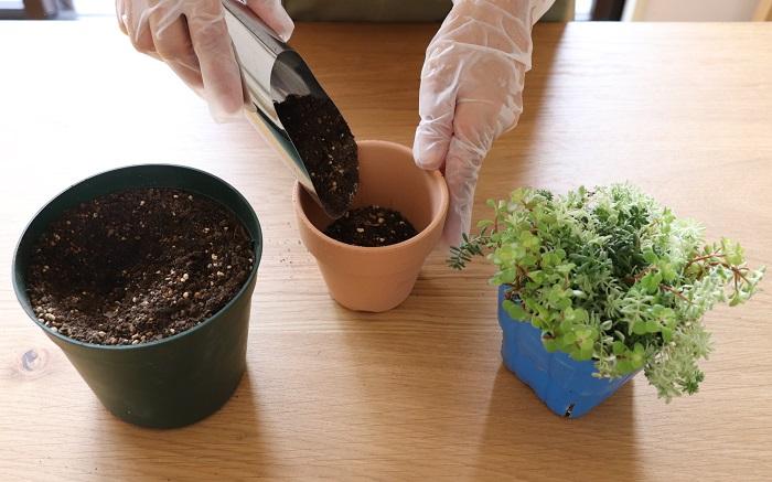 鉢底ネットを敷いたテラコッタ鉢に、鉢の高さの半分くらいまで土を入れていきます。