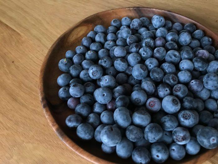 ブルーベリーを収穫、収穫したブルーベリーを使って、レアチーズケーキを作ってみます。