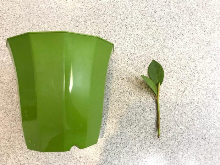 挿し木する枝より少し高さがある鉢を準備します。
