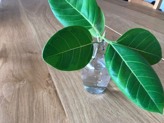 樹液を洗い流したら、水を入れた花瓶に挿しておきます。直射日光が当たる場所より、明るくカーテン越しの光が入る明るい日陰が適しています。