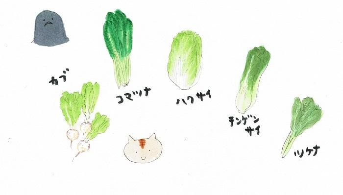 科 野菜 アブラナ の アブラナ科野菜は「台所のドクター」 心疾患、脳卒中、がんのリスクを低下