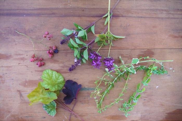 ・ヒューケラの葉  ・ローズマリー  ・タイム  ・オレガノ  ・ブルーベリー  ・バジル  ・モナルダ  ・ミントなど  ヒューケラをお庭から摘んでくるときは、あまり茎が長くない植物なので、可能な限り根元から長く茎を取るようにカットしましょう。