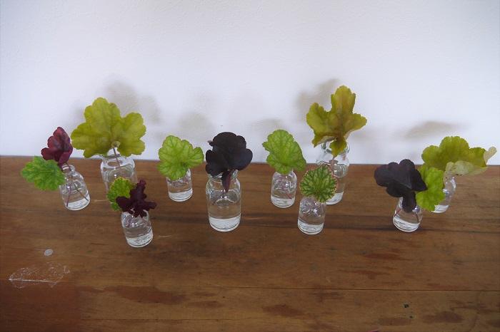 小瓶を並べて、ヒューケラを入れていきます。ここでバランスを取るようにしましょう。葉の大きさや、色の濃さで重さや軽さのバランスを考えます。