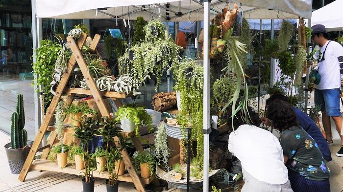 https://www.grena-tred.com/  横須賀線田浦駅前にアトリエを構えている、グレナ トレドさんです。グリーンコーディネートやデザイン、ワークショップをされています。  今回のイベントブースもコーディネートがとっても素敵でした。最近人気のディスキディアをメインに、多肉植物やエアプランツが所狭しと垂れ下がっていたり、小物と一緒に足元にも並んでいました。  多肉植物の育て方が書かれたプリントも用意されている丁寧ぶりに、オーナーの新井さんの人柄が伝わってきます。植物を育ててほしい、自宅にグリーンを増やす楽しみを伝えたい、という気持ちからプリントを作ったそうです。心地が良くて、いつまでもいたくなるようなブースでした。  田浦駅前のアトリエは多忙の為、お留守にされていることも多いそうです。訪問の際はご連絡をしてからにしたほうが良いそうです。