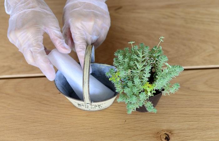 ・ブリキの器(底穴が無い場合は、穴をあけましょう。) ・不織布 ・セダムの苗