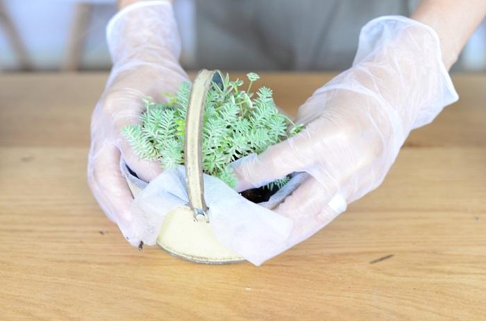 セダムが美しく見える向きを考えながら、苗をブリキの器にセットします。