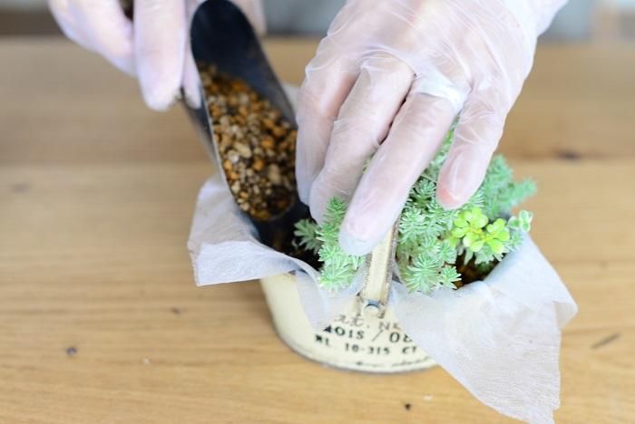 隙間に土を一周入れます。指でつつきながらしっかりと土を入れることで、苗がぐらつかずに根付きます。
