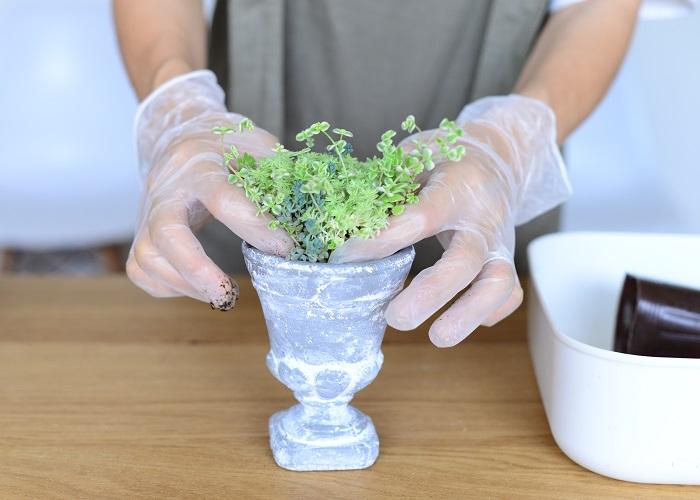 セダムの苗を底穴の無い器に植えていきます。