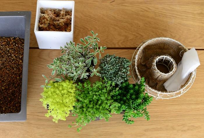 ・リース型の器(直径20cmほど) ・不織布 ・水苔(水でふやかしておきます。) ・市販の培養土(「野菜、花用の土」または、「多肉植物、サボテン用の土」など) ・セダムの苗5ポットほど