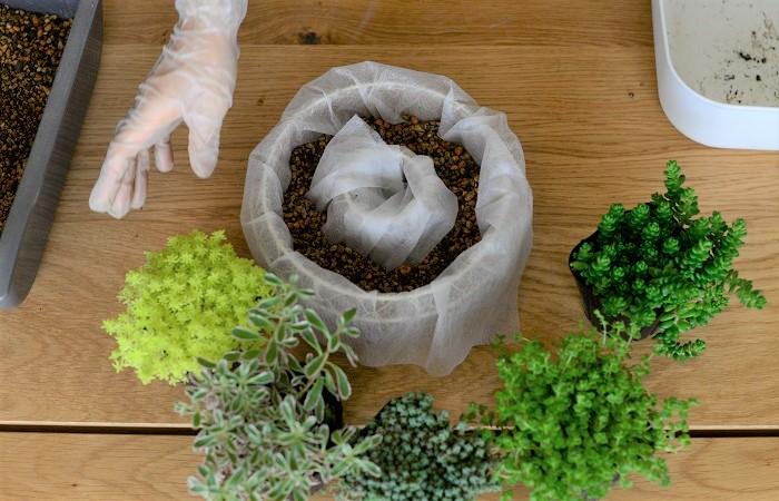 セダムの色や葉の形を見て、植えていく順番をおおまかに決めます。