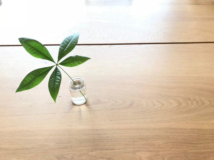 水耕栽培するために切り落としたパキラの葉も飾ってみても素敵です。同時にこの葉も水耕栽培してみましょう。