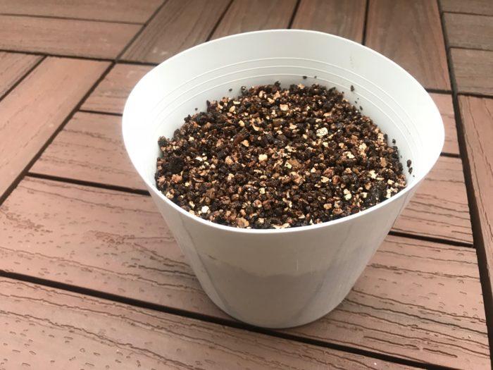 土はバーミキュライトを鉢に入れて準備します。