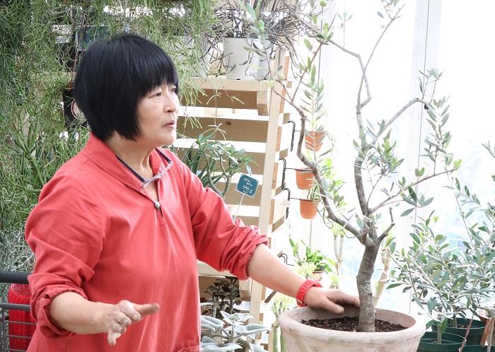 剪定完了です。とてもすっきりした樹形になりました。  岡井先生「オリーブは株元がすっきりで、空に向かって両手を広げて光と風をたくさん取り込む樹形が理想的なので、さらに樹形づくりをしていきましょう。」