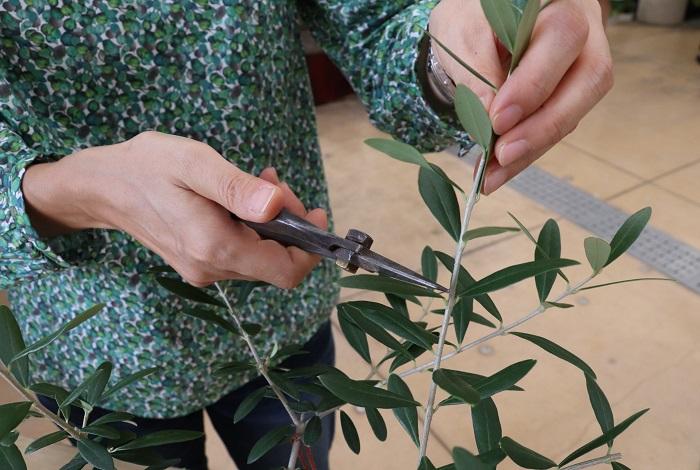 全体的に気持ち少し長めの位置で切っていき、切らずに残した枝は先の方を手でソフトピンチしました。