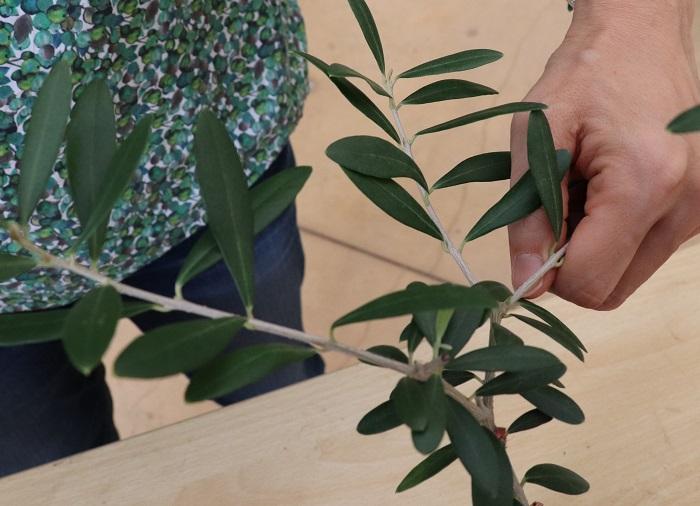 切るのを悩む枝は手で隠して、この枝が無かったらどんな樹形になるかイメージします。  イメージした結果、その枝の半分くらいを切ることにしました。