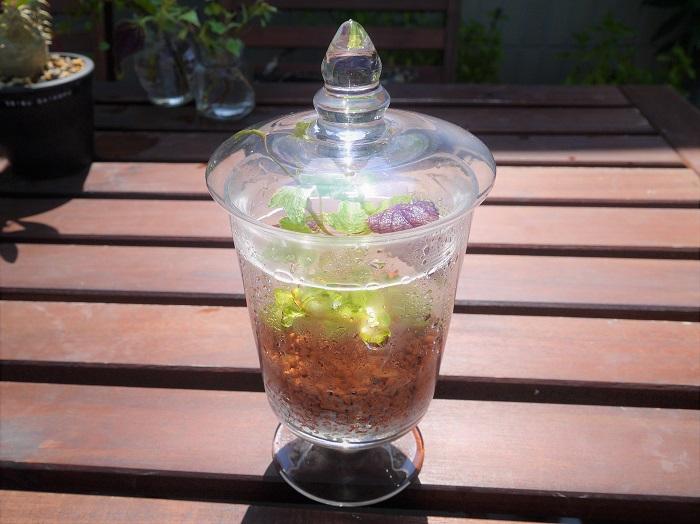 広義には、蓋をしたガラスの容器の中で植物や生物を飼育することを指します。起源は19世紀のイギリスが始まりと言われています。ガラスの器の中にその植物に適した環境を作ることで、温室を持たない人々も植物を栽培することが可能になったと喜ばれました。  一般的に園芸用語では、密閉したガラスの器の中で植物を育成することを言います。ガラスのなかは温度、湿度共に外部からの影響を受けにくく、病害虫も植え込みの際に入り込まなければ影響がありません。