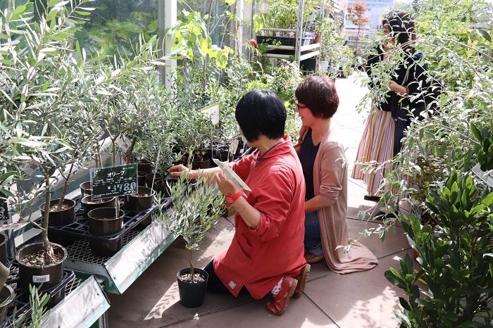 オリーブの品種は、世界ではなんと1000品種以上に及ぶそうです。実の大きさや形、樹形の違い、育てやすさや実の油分の含有量、実のつきやすさなどがそれぞれ違うとか。  オリーブセミナーでは、みなさん岡井先生からのアドバイスを聞いてオリーブを選んでいました。自分の庭や目的にぴったりのオリーブを選ぶのは楽しいですし、そうやってこだわって選んだオリーブを大切に育てる時間がさらに楽しいですよね。