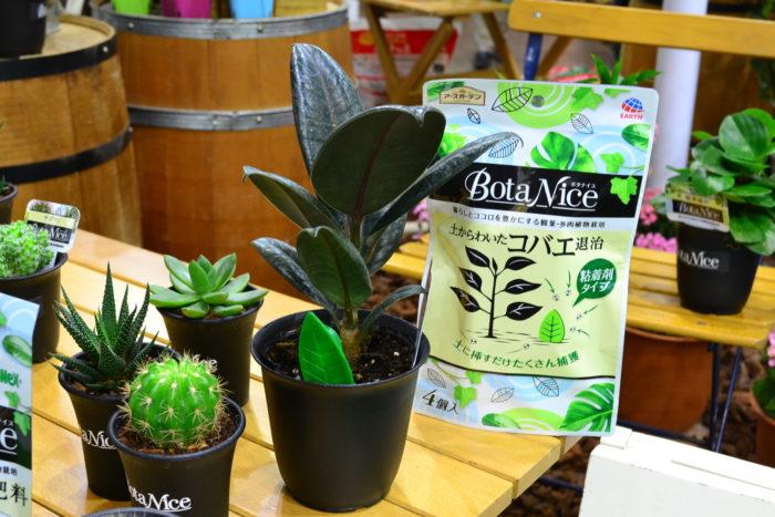 同じくBota Nice(ボタナイス)シリーズ。  こちらは土に刺すだけでコバエがたくさん捕獲できる優れもの。写真中央の観葉植物の鉢に刺してある葉っぱ状の緑色のが商品です。薬っぽくないデザインなのでインテリアにもなじみますね。今回は同時にサボテンや多肉植物も商品として発売されます。