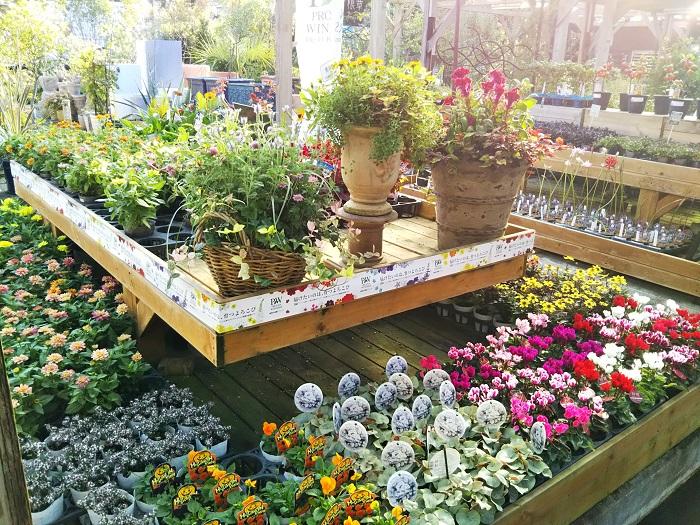 お店にいることで植物の日々の生長や変化を見ることができ、実はそれほど好みではなかったタイプの植物の魅力にまで気づくこともあるんです。植物の色もそうです。あまり好みでなかった色合いや、ありえないと思っていた色の植物でさえ、組み合わせるものによってきれいに見えたり、好きな色の幅がどんどん広がることが面白いです。  お店にはどんどん苗が入荷してくるので、たくさんある苗の中から選んで寄せ植えやハンギングバスケットを作ることがこの上なく楽しいです。そんな楽しいことが自分でお金を出して植物を買わなくてもできちゃうんですから、それが何よりありがたい。(笑)