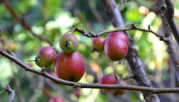 自然からの贈り物。秋の実がかわいい花木と草花15選   LOVEGREEN(ラブ ...