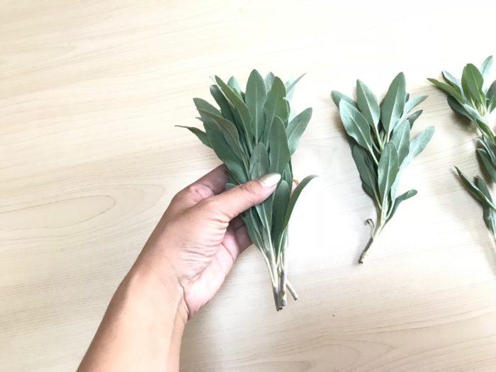 長さを揃えたホワイトセージの葉を手で束ねます。