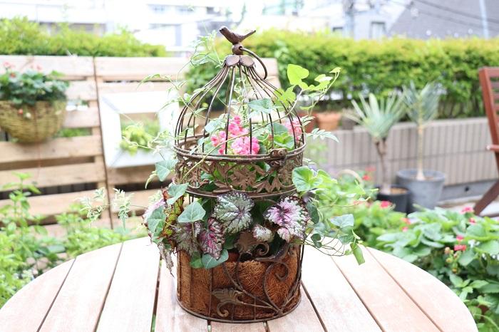 使っている植物:八重咲きベコニア、レックスベゴニア、アイビー、ハゴロモジャスミン  5月初めから6月初め頃(初夏)には、梅雨にも楽しめる寄せ植え作りがおすすめです。  インパチェンスやベコニアなどの半日陰でもよく育つ植物を使って、木漏れ日のシェードガーデンで美しく映える寄せ植えを作りましょう。