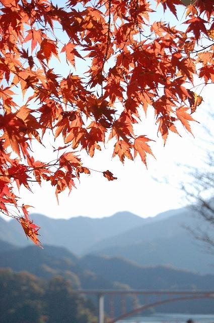 神奈川県にある宮ケ瀬湖に、鳥居原エリアという場所があります。景色がとても美しいんです。植樹のボランティアでそのエリアに行き、ドウダンツツジを植えたことがあり愛着があります。八王子から車で30分ぐらいで行けて、駐車場から歩いて坂を下りてきれいな景色を楽しんで坂を上って帰ってくると運動量がちょうどよく、農林産物直売所もあり、ゆっくりと楽しめるんですよ。