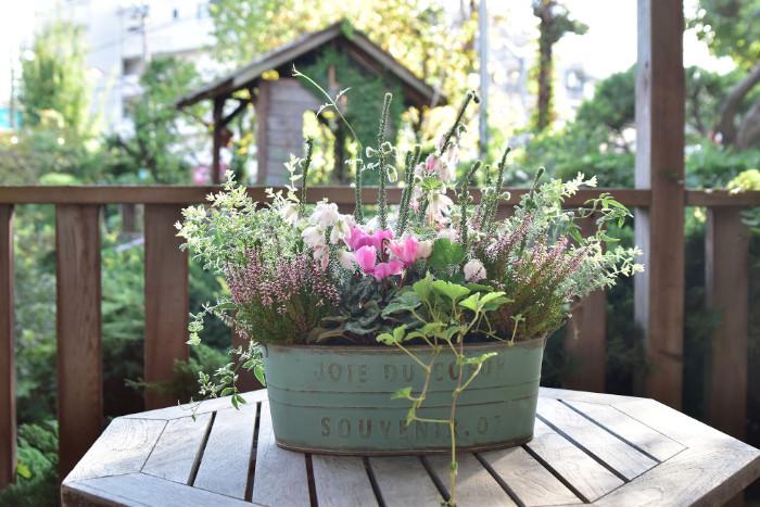 Botapii, ボタピー, この植物をお買い, 土谷ますみ, 冬の寄せ植え, ピンクの花, かわいい寄せ植え