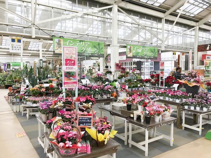 「ガーデンセンター」では季節折々の花苗、観葉植物、多肉、サボテンなど様々な商品が並び、いつ行ってもお客様を楽しませる空間づくりです。また、バイヤーが直接生産農家に赴き、こだわりの商品を入荷しています。