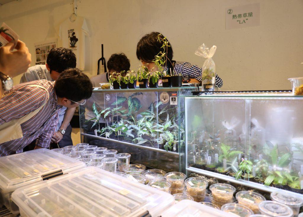熱帯草屋LA (1)
