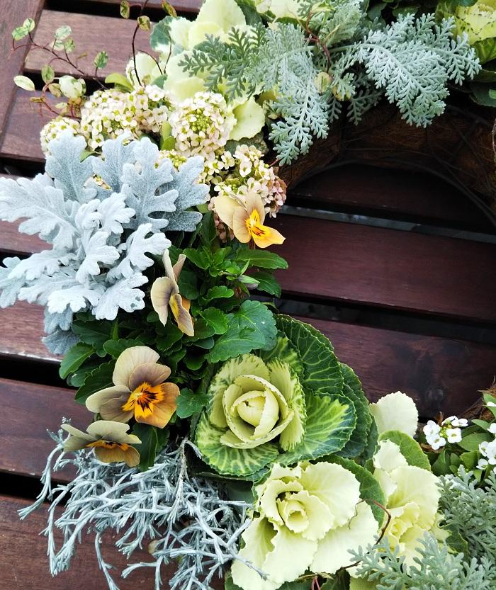 今回、ハボタンとビオラをメインに「育てるリース」を作ると決めて、では全体の色を何色にするか考えていた時、この淡いアンティークカラーのビオラに出会い、「このビオラの色を生かしてリースを作りたい!」と思いました。全体的に淡い色を集めてみましたが、淡い、似た雰囲気の色合いの草花の中にも、白に近いか、クリーム色に近いか、イエロー系か、オレンジ系か、ブラウン系か、など、様々な色を発見して面白く感じました。  写真の撮り方によっても色合いが違って見えますよね。  クリスマスにもお正月にも飾れるペールトーンの「育てるリース」は冬から春まで楽しめます。ぜひ、作ってお楽しみください。