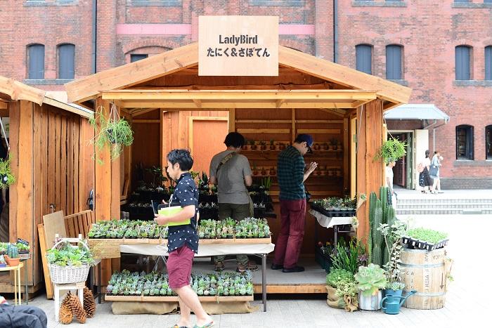 栃木県で300種類以上の多肉植物、サボテンを生産している福田さん。