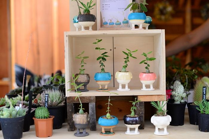 塊根植物が植えられている可愛らしい鉢。すべてオリジナルの手作り。同じようでもよく見てみると、ひとつひとつ異なったフォルムなので、植える植物とのバランスを考えながら器選びも楽しみのひとつです。