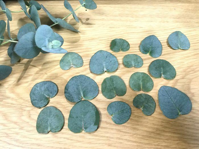 ユーカリの葉をカットします。大中小と色々なサイズの葉を数枚カットします。