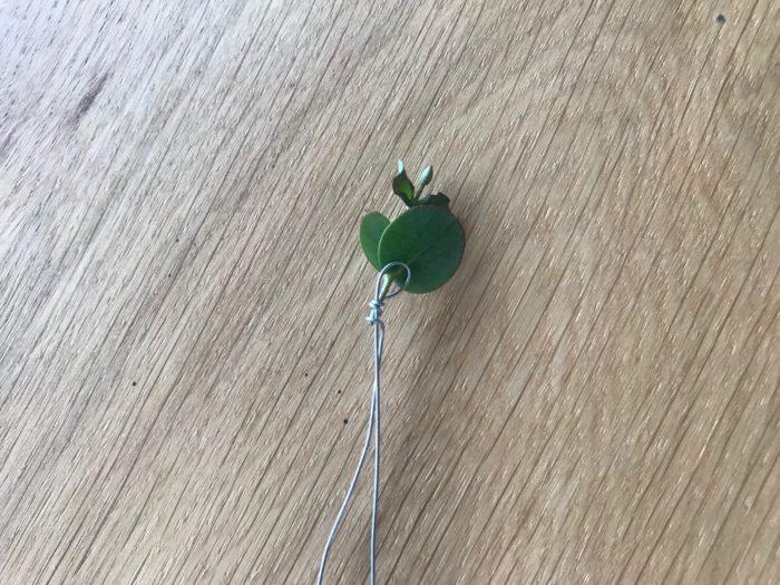 カットした葉先もワイヤリングします。ワイヤリングのやり方はUの字になったワイヤーのUの部分を少し葉にかかる場所に添えます。添えた箇所を親指と人差し指で葉とワイヤーを一緒におさえます。おさえていない方の手で2つに分かれているワイヤーの片側を持ち、もう片側のワイヤーとユーカリの茎を一緒にまき込みグルグルっと数回まきます。