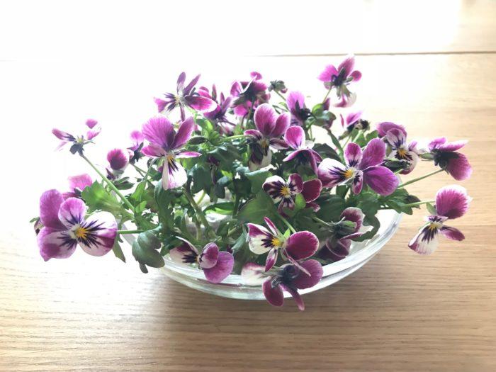 お庭で育てたビオラの花が徒長してきたら剪定して生けてみましょう。