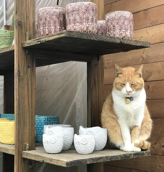 あとは、猫が大好きです。(笑)  「ガーデンセンターさにべる」には看板猫として、茶トラのみーちゃん(女の子)がいます。みーちゃんは3代目の看板猫で、1代目は球根を食べるねずみ対策のためにお店で飼い始めました。今はその働きをしてくれているかは謎ですが、とても人なつこく良い性格の子です。