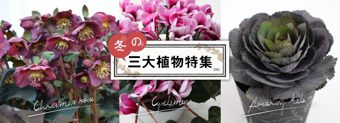 冬の三大植物