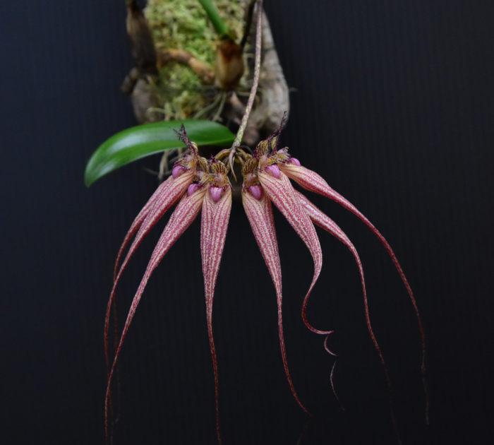 可愛らしい花から一変、こんなに個性的なランもあります。いまにも動き出しそうな形が好奇心を刺激します。他にもいろんなランを掲載していますので、ぜひ見ていただければ。