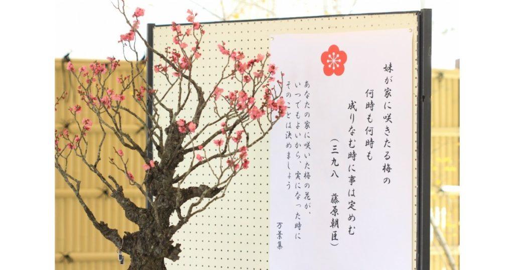 春を告げる盆梅展 in花の文化園