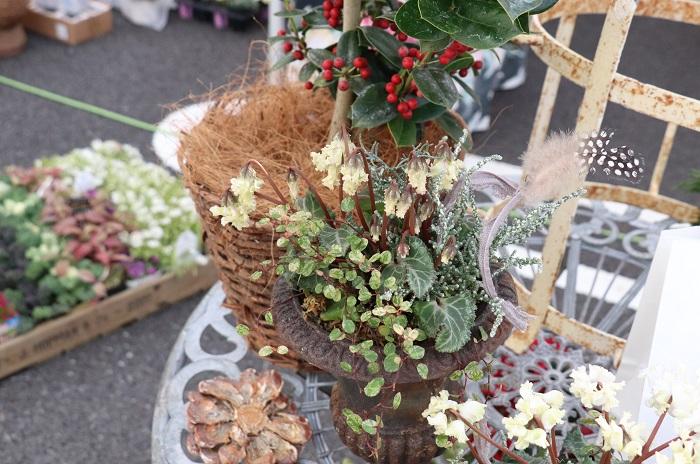 群馬県桐生市にアトリエを持つfleuriste scèneさん。  アンティーク色の美しい花苗やカラーリーフが並んでいました。