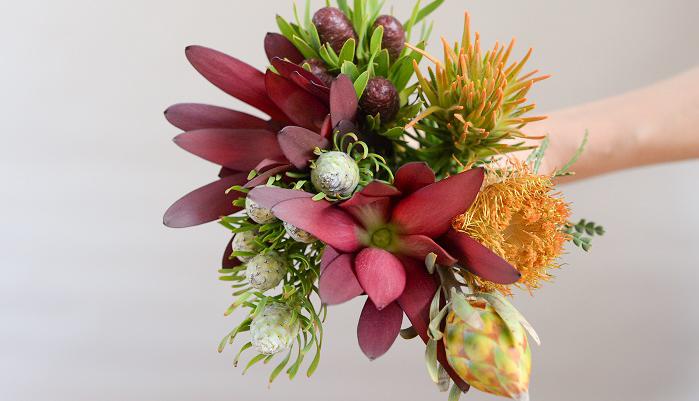 ネイティブフラワーは色や形が様々でユニークな花材がたくさんあります。特にクリスマスの季節は、一番たくさんの種類のリューカデンドロンが出回っていて、ひとつひとつ面白い花だなと思いながら仕入れをしています。