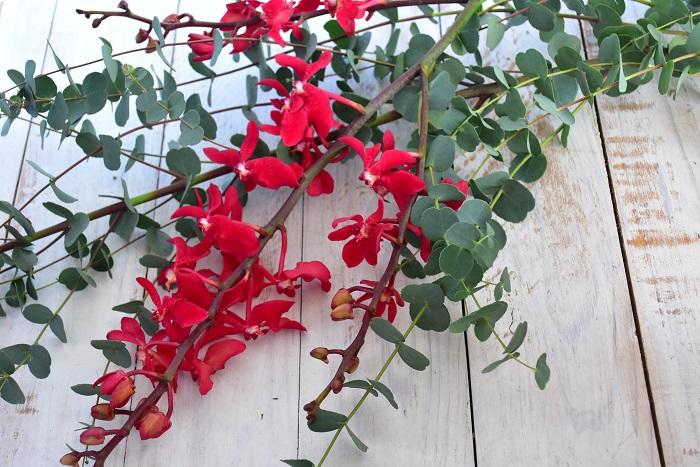 ユーカリ  ランを少しカジュアルな雰囲気にしたいなら、ハーブ系の枝物とあわせても素敵です。
