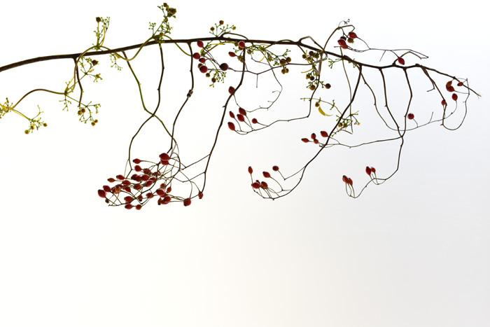 野バラの実のような枝ものに絡めて作ると、重さのある実ものなどもあしらうことができます。