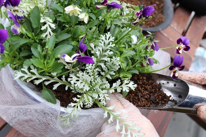6ポットすべて配置できたら、苗と苗の隙間に土を入れていきます。指でつっつきながら、苗がぐらつかないようにしっかりと土を入れましょう。