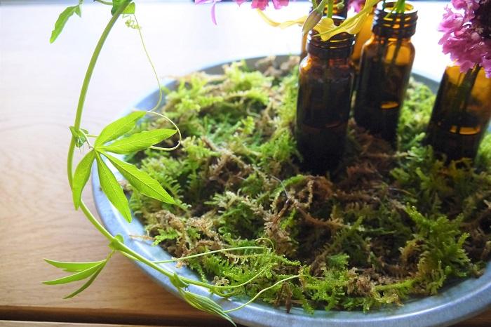 ツル植物を回し入れて全体の雰囲気を統一し、野原のような世界を作ります。