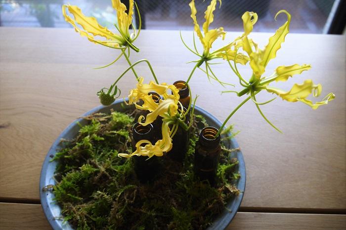 薬瓶の位置が決まったらトレー全体にハイゴケを敷き、大きなお花から入れていきます。今回は、グロリオサ・ルテアが大きく存在感があるので、グロリオサ・ルテアからです。